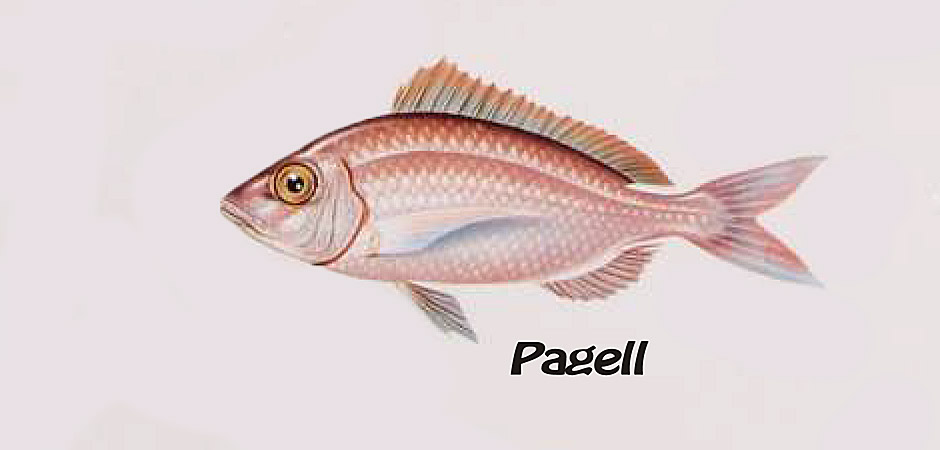 PAGELL